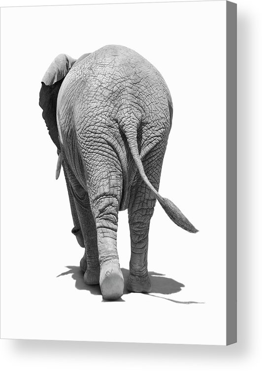 Shadow Acrylic Print featuring the photograph Elephants Behind by Burazin