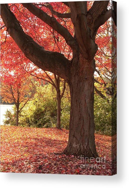 Autumn Acrylic Print featuring the photograph Shading Autumn by Ann Horn