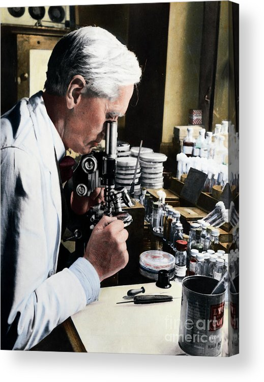 Microscope Acrylic Print featuring the photograph Alexander Fleming At Microscope by Bettmann