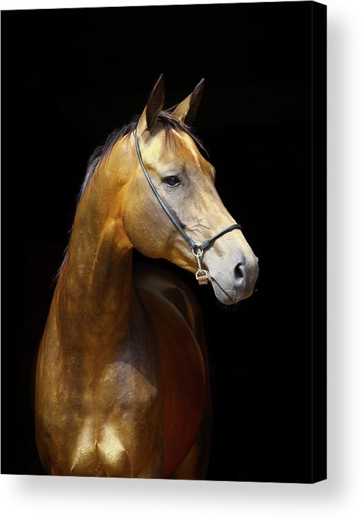 Horse Acrylic Print featuring the photograph Golden Horse by Photographs By Maria Itina