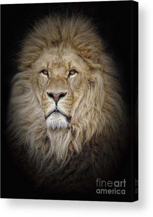 Big Cat Acrylic Print featuring the photograph Portrait Of Lion Against Black by Stephan Naumann / Eyeem