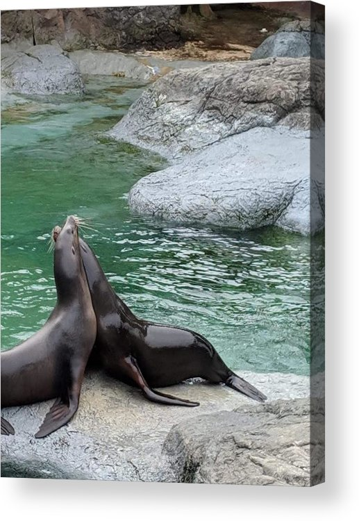 Blue Acrylic Print featuring the photograph Seal by Aswini Moraikat Surendran
