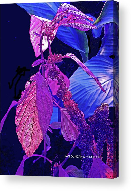 Blue Acrylic Print featuring the photograph Climbing Leaves by Ian MacDonald