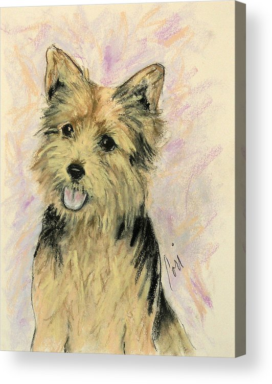 Dog Acrylic Print featuring the drawing Soulmate by Cori Solomon