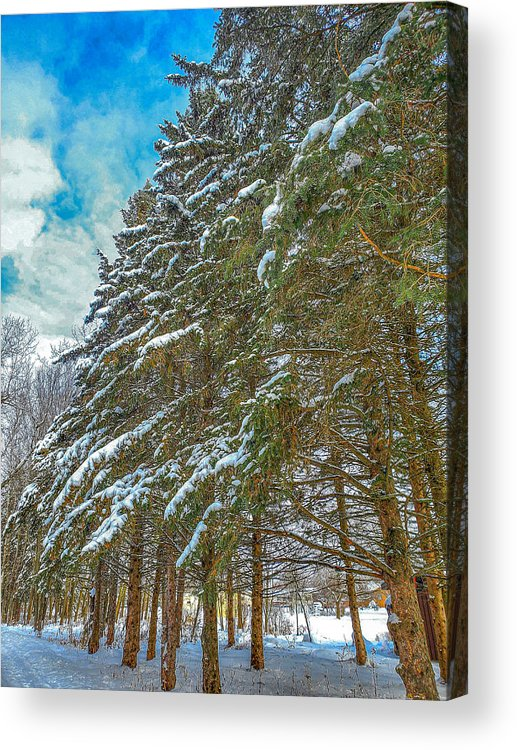 Nature Acrylic Print featuring the photograph Winter trees by M Forsell