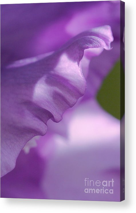 Flower Acrylic Print featuring the photograph Face In A Glad by Steve Augustin
