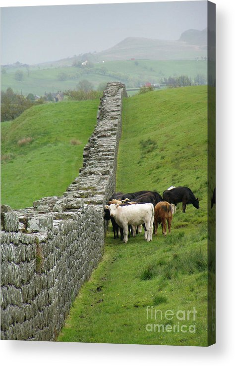 Scotland Acrylic Print featuring the photograph Hangin Out At Hadrians Wall England Scotland by Lesley Nolan