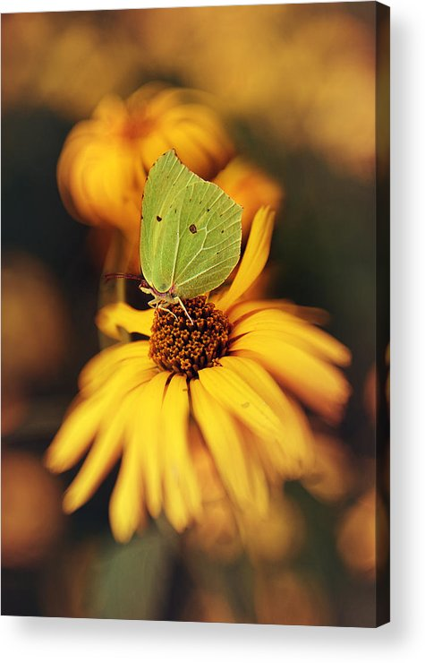 Macrophotography Acrylic Print featuring the photograph In My Garden by Jaroslaw Blaminsky