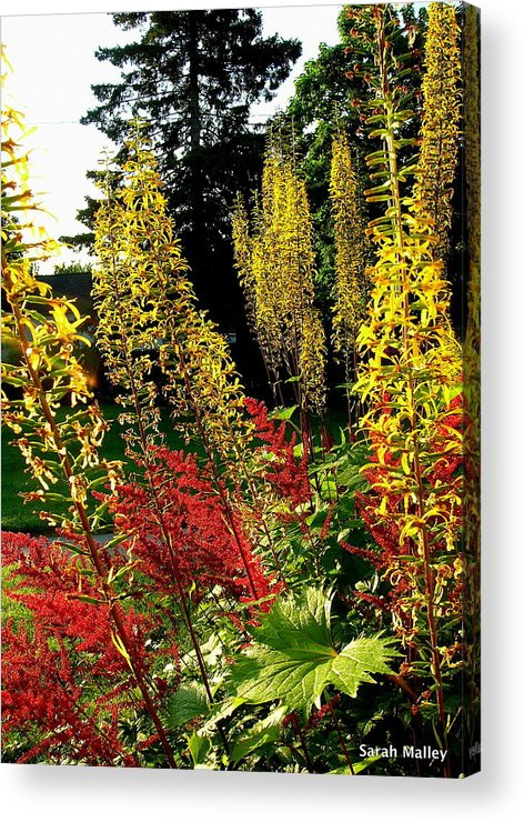 Flowering Garden Perennial Acrylic Print featuring the photograph Ligularia And Astilbe by Sarah Malley