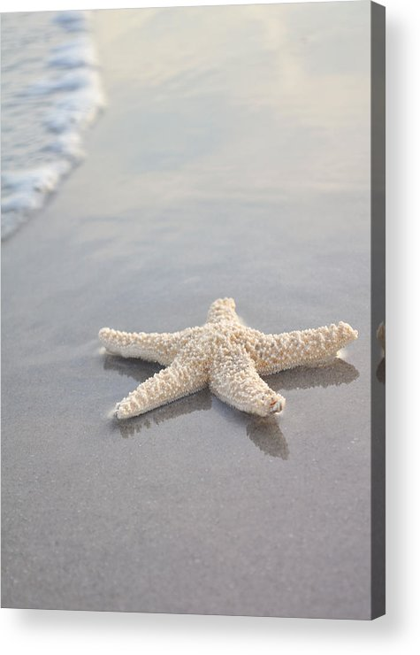 Beach Acrylic Print featuring the photograph Sea Star by Samantha Leonetti