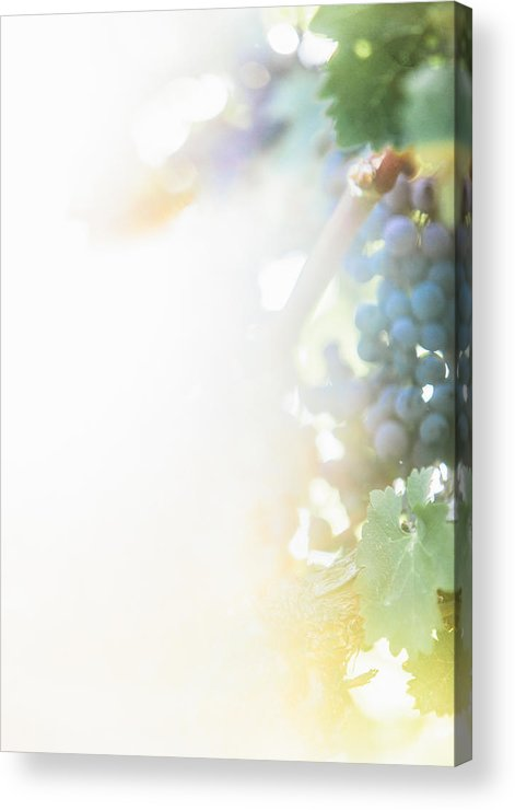 Fine Art Acrylic Print featuring the photograph The Modern Grape 3 by Clint Brewer