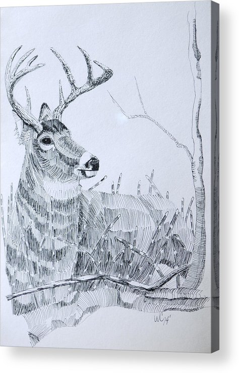 Wildlife Acrylic Print featuring the drawing Waiting For Dusk by Wade Clark