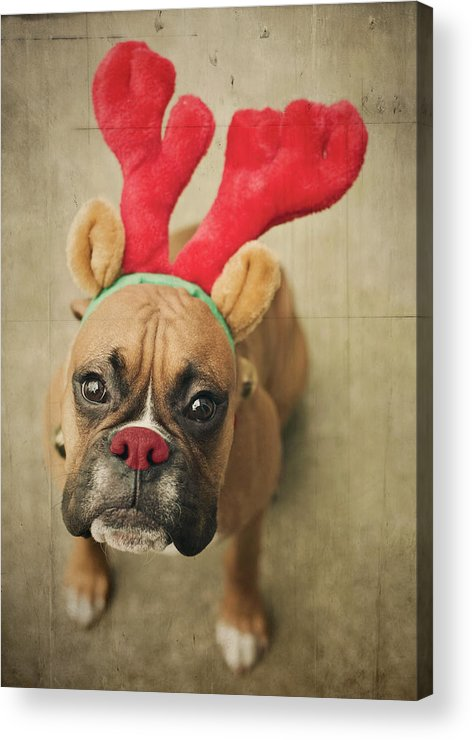 Vertical Acrylic Print featuring the photograph Funny Boxer Puppy by Jody Trappe Photography
