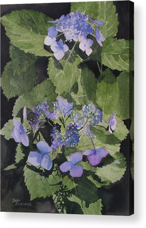 Flowers Acrylic Print featuring the painting Blue Lace by Jean Blackmer