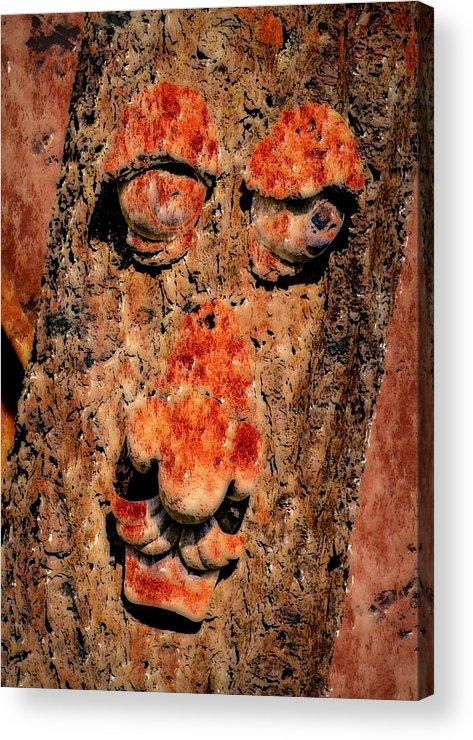 Tree Acrylic Print featuring the photograph Bug Eyes by Lori Seaman