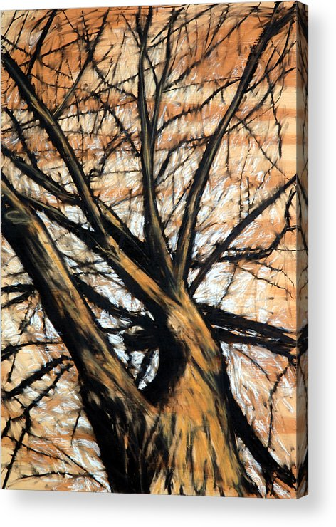 Tree Acrylic Print featuring the drawing Dead Elm by John Terwilliger