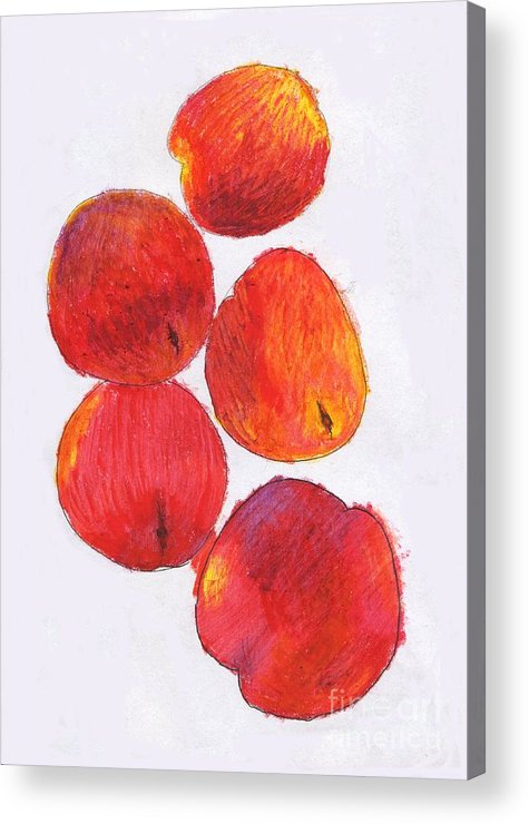 Nectarine Acrylic Print featuring the drawing Five Nectarines by Andy Mercer
