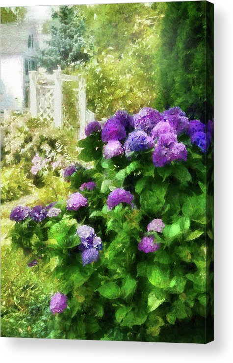 Suburbanscenes Acrylic Print featuring the photograph Flower - Hydrangea - Lovely Hydrangea by Mike Savad