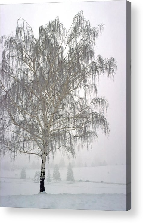 Nature Acrylic Print featuring the photograph Foggy Morning Landscape 11 by Steve Ohlsen