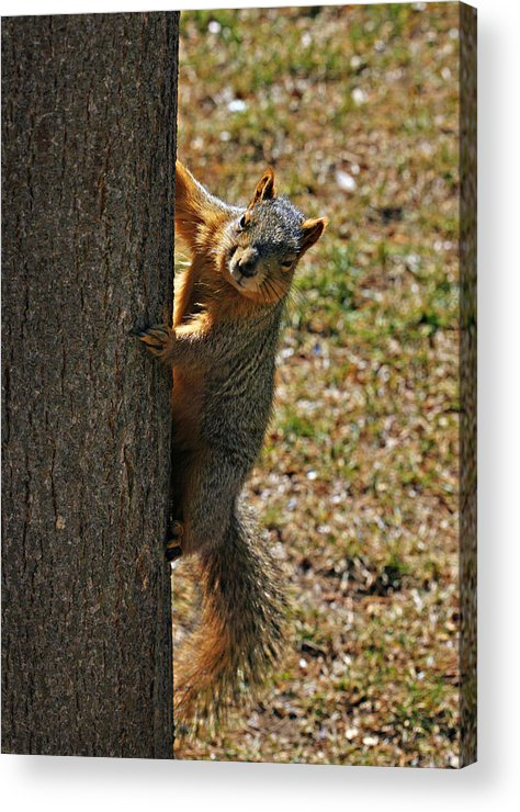 Squirrel Acrylic Print featuring the photograph I See You by Marilyn Hunt