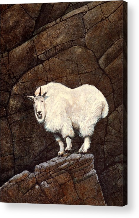 Wildlife Acrylic Print featuring the painting Mountain Goat by Frank Wilson