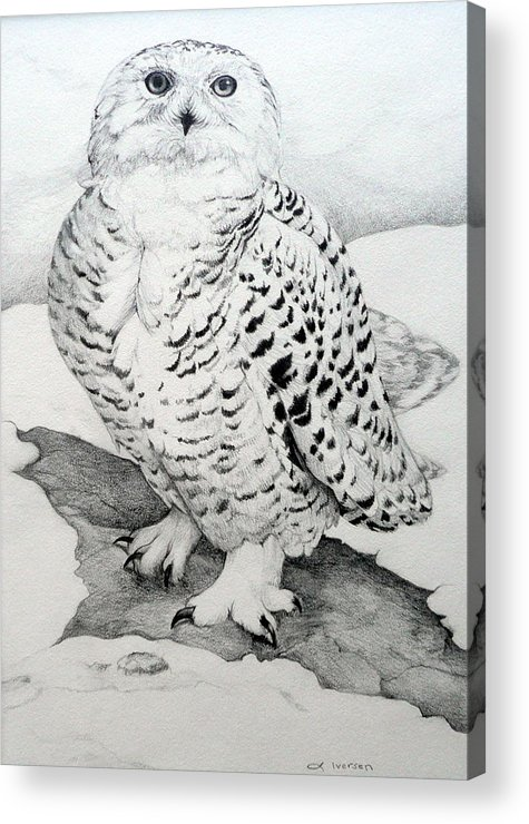 Snowy Owl Acrylic Print featuring the drawing Snowy Owl by Jill Iversen