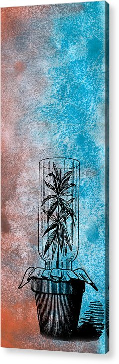 Cage Hold Enclosure Close In Confine Enclose Envelop Bottle Glass Plant Life Art Drawing Painting Artwork Paintings Illustration Graphic Natural Detail Line Drawings Plants Organic Nature Lineart Ink Etch Draw Botanical Pattern Kyllo Leaf Red Blue Pot Potted Science Footprint Thin Tall Skinny Slender Slim Long Vertical Fit Decor Straight Narrow Graceful Elongated Decoration Blueish Reddish Acrylic Print featuring the painting Imprisoned Life by R Kyllo