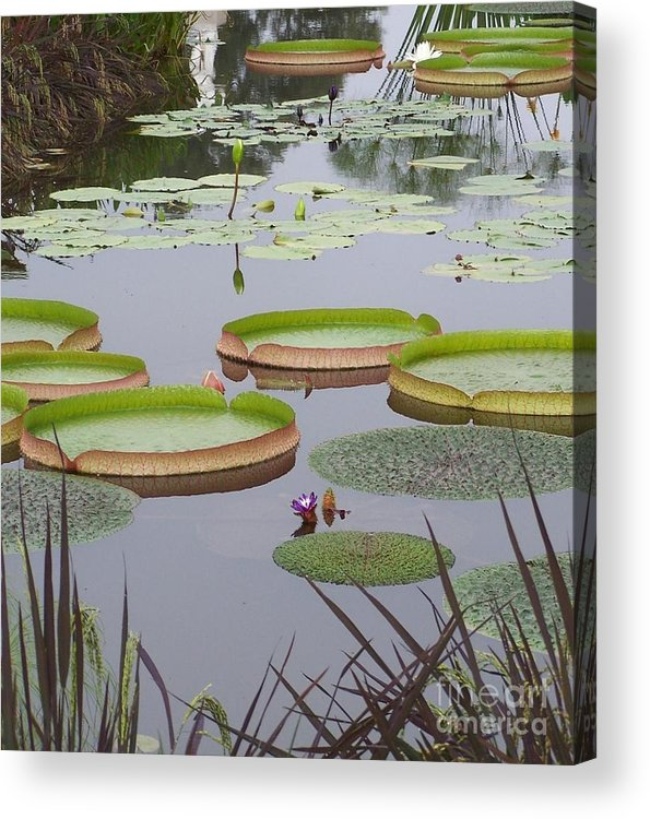 Biltmore Acrylic Print featuring the photograph Biltmore House Water Garden by Randy Edwards