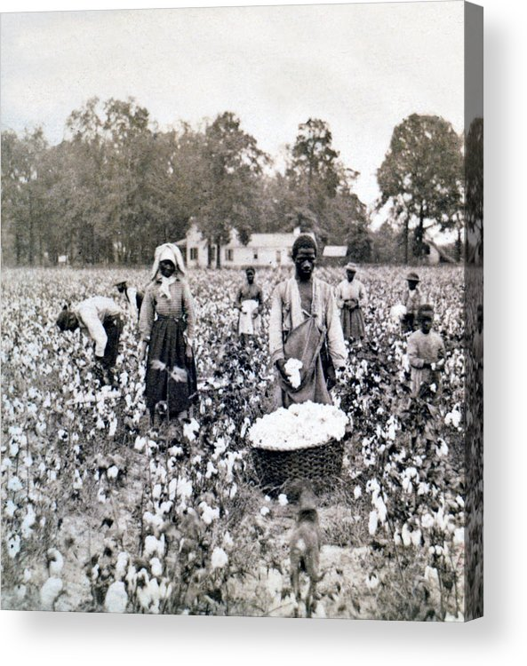 Georgia Acrylic Print featuring the photograph Georgia Cotton Field - C 1898 by International Images