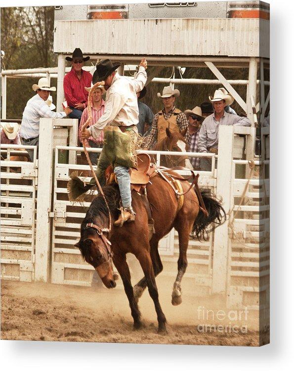 Cowboy Acrylic Print featuring the photograph Rodeo Cowboy Riding A Wild Horse by Mark Hendrickson