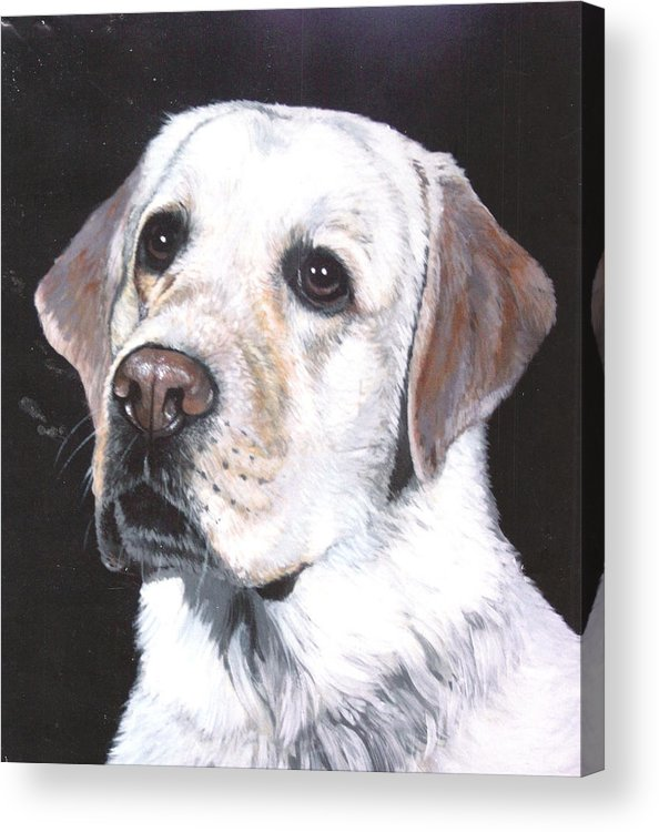 Pet Portrait Acrylic Print featuring the painting Retriever by Steve Greco