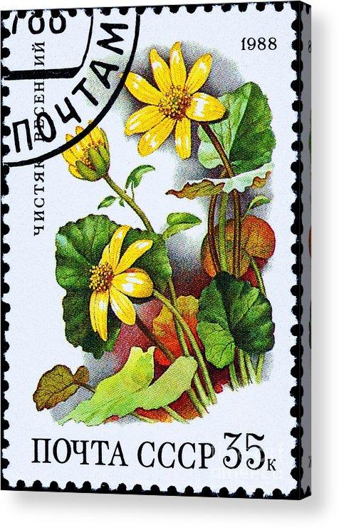 Photograph Acrylic Print featuring the photograph Yellow Lesser Celandine Ranunculus Ficaria by Jim Pruitt
