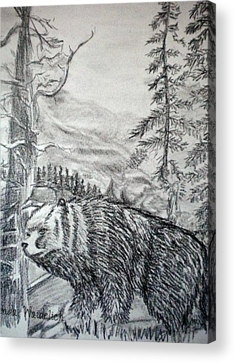 Pencil Acrylic Print featuring the painting Bear In The Woods by Linda Waidelich