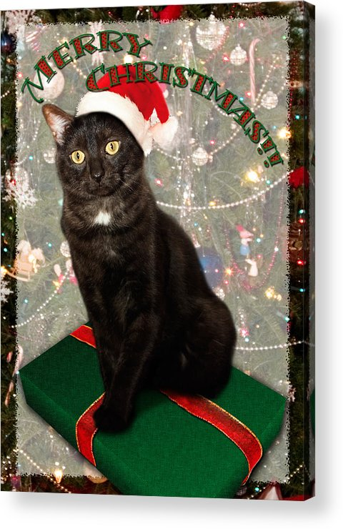 3scape Acrylic Print featuring the photograph Christmas Cat by Adam Romanowicz