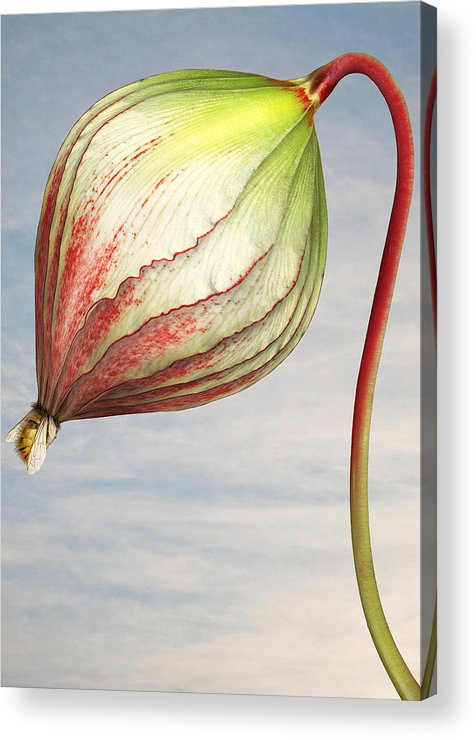 Artificial Acrylic Print featuring the photograph Close Up Of Triffid Flower by Matt Walford