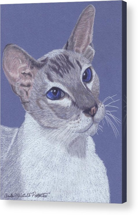 Cat Acrylic Print featuring the painting Colorpoint Vignette by Anita Putman