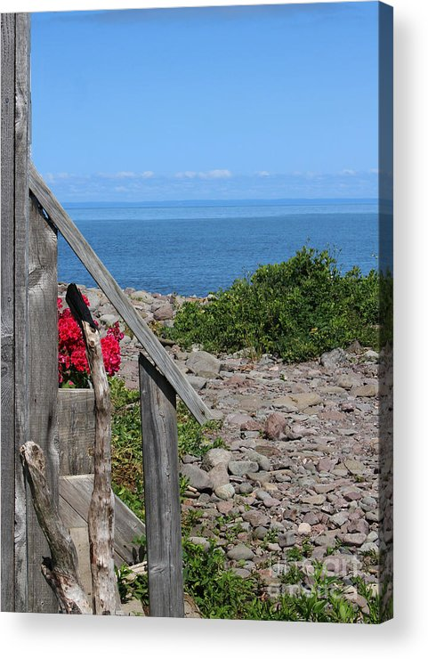 Driftwood Acrylic Print featuring the photograph Overlooking Bay Of Fundy by Cheryl Aguiar