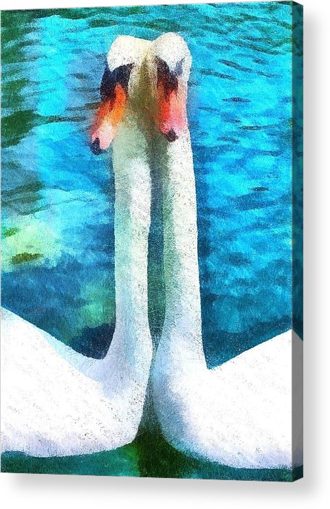 Swans Acrylic Print featuring the photograph Pen And Cob by Amy G Taylor