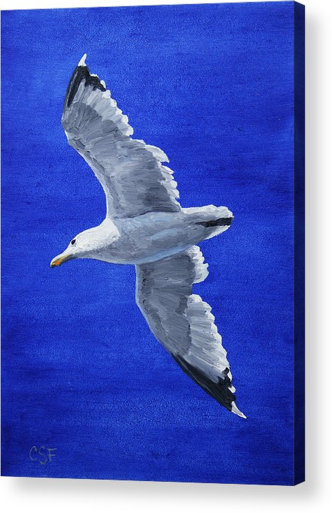 Bird Acrylic Print featuring the painting Seagull In Flight by Crista Forest