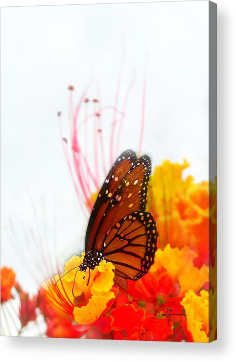 Soft Acrylic Print featuring the photograph Soft Embrace by Kume Bryant