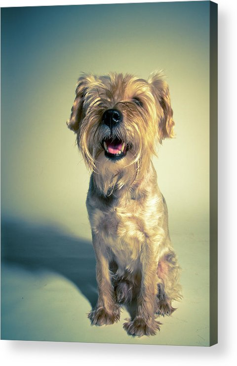 Vertical Acrylic Print featuring the photograph Cleveland Dog by Square Dog Photography
