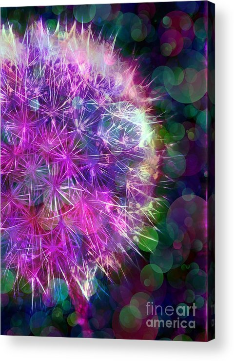Dandelion Acrylic Print featuring the photograph Dandelion Party by Judi Bagwell