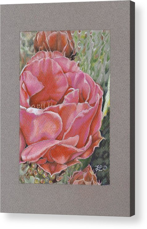 Floral Acrylic Print featuring the drawing Desert Rose by Lidia Penczar