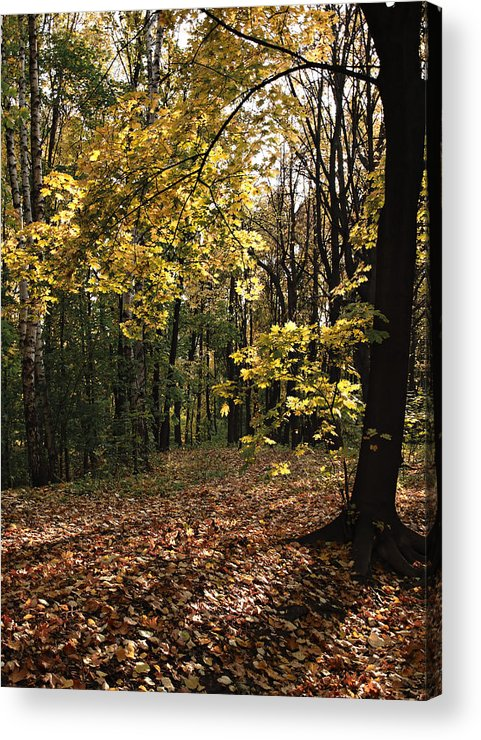 Coloured Acrylic Print featuring the photograph Forest In Fall by Michael Krekin
