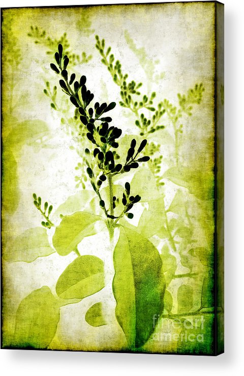 Leaves Acrylic Print featuring the photograph Study In Green by Judi Bagwell
