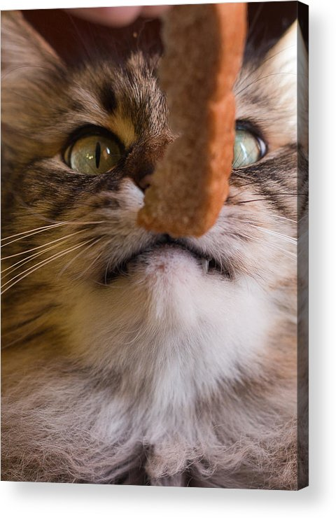 Bread Acrylic Print featuring the photograph To Carb Or Not To Carb by Kittysolo Photography