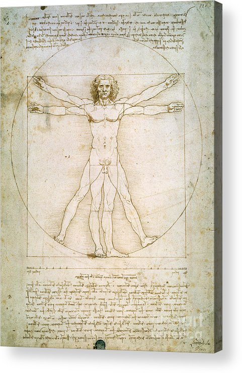 The Acrylic Print featuring the drawing The Proportions Of The Human Figure by Leonardo da Vinci