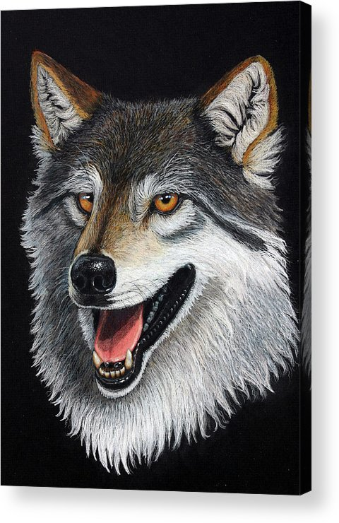 Animal Acrylic Print featuring the mixed media A Friendly Wolf by Lorraine Foster