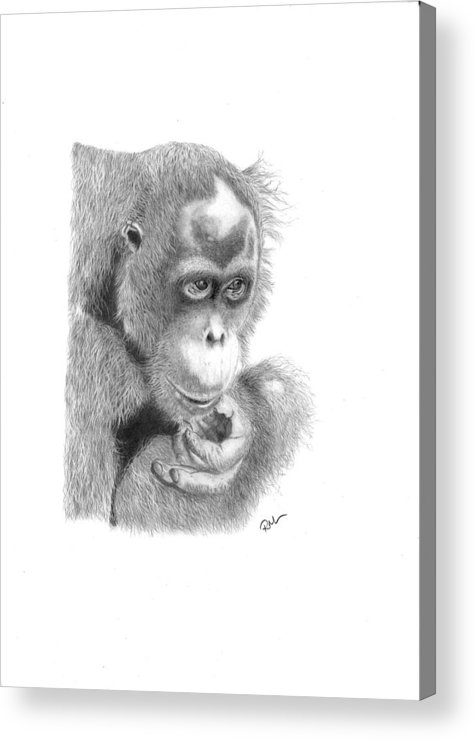 Animals Acrylic Print featuring the drawing Annie by Rosanna Maria