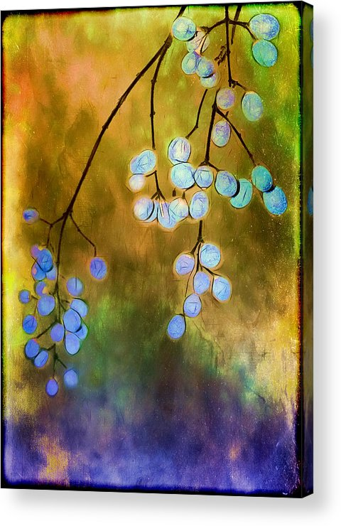 Berries Acrylic Print featuring the photograph Blue Autumn Berries by Judi Bagwell